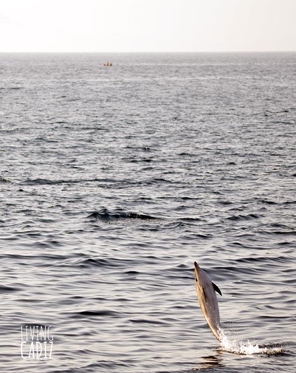 Dolphin watching in Tarifa