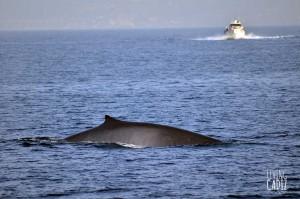 Ballenas y delfines en el Estrecho