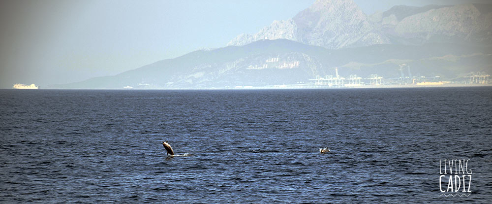 Tarifa Whale Watching