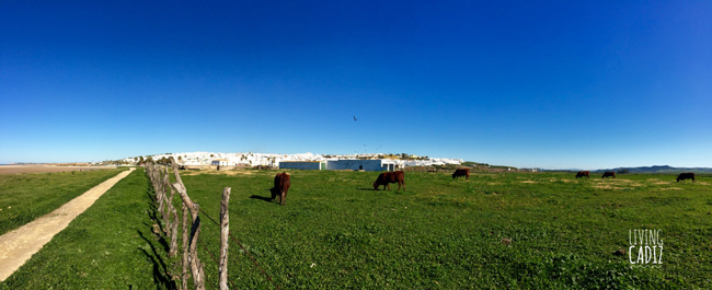 Castilnovo's grassland