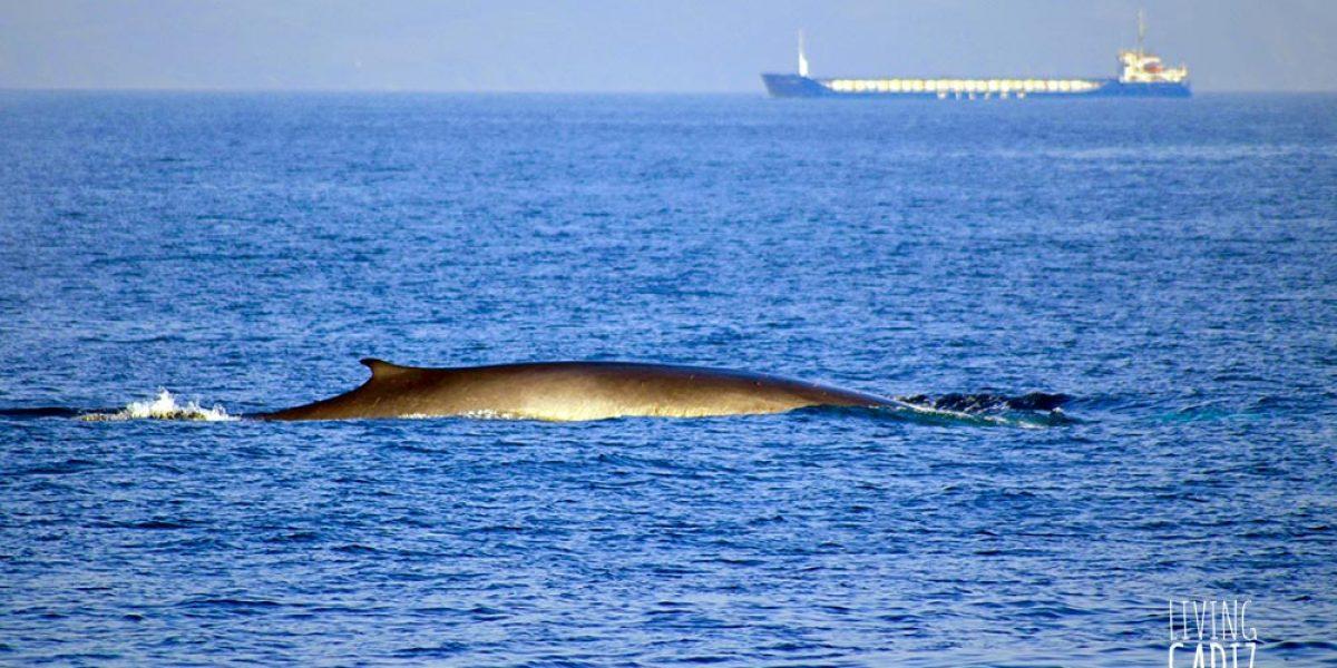 Avistamientos de delfines y ballenas